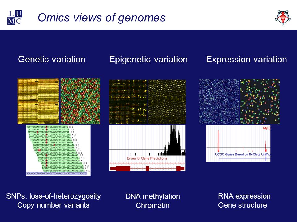 Omics views of genomes RNA expression Gene structure Genetic variationExpression variation DNA methylation Chromatin Epigenetic variation SNPs, loss-of-heterozygosity Copy number variants