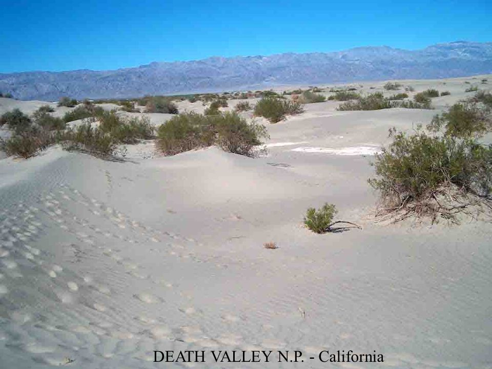 YOSHUA TREEN N. P. (California)