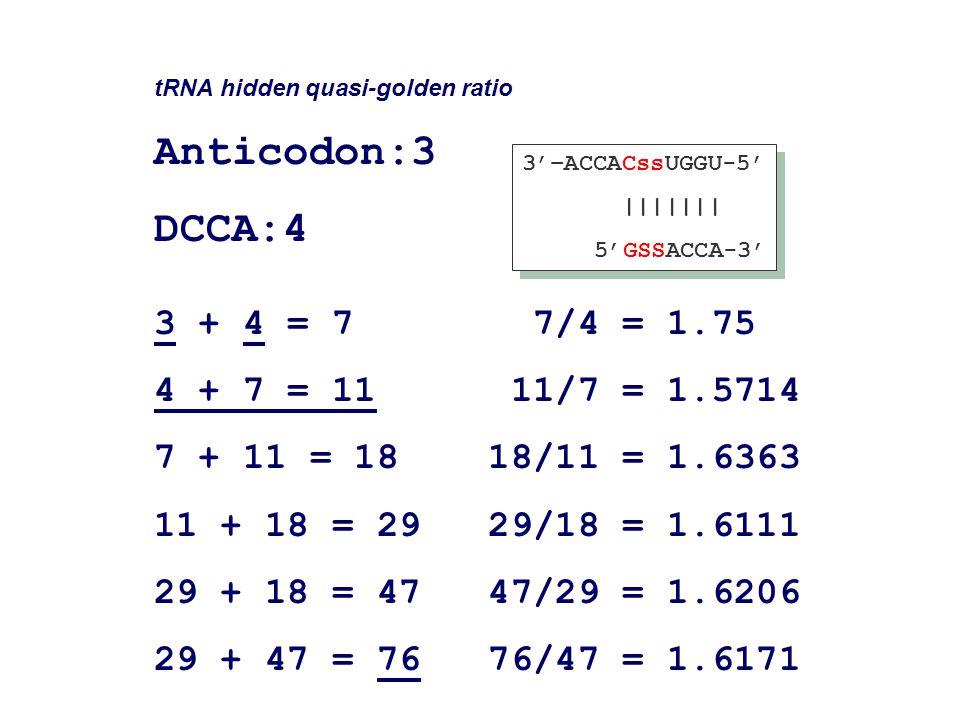 tRNA hidden quasi-golden ratio Anticodon:3 DCCA:4 3 + 4 = 7 7/4 = 1.75 4 + 7 = 11 11/7 = 1.5714 7 + 11 = 18 18/11 = 1.6363 11 + 18 = 29 29/18 = 1.6111 29 + 18 = 47 47/29 = 1.6206 29 + 47 = 76 76/47 = 1.6171 3'–ACCACssUGGU-5' ||||||| 5'GSSACCA-3' 3'–ACCACssUGGU-5' ||||||| 5'GSSACCA-3'