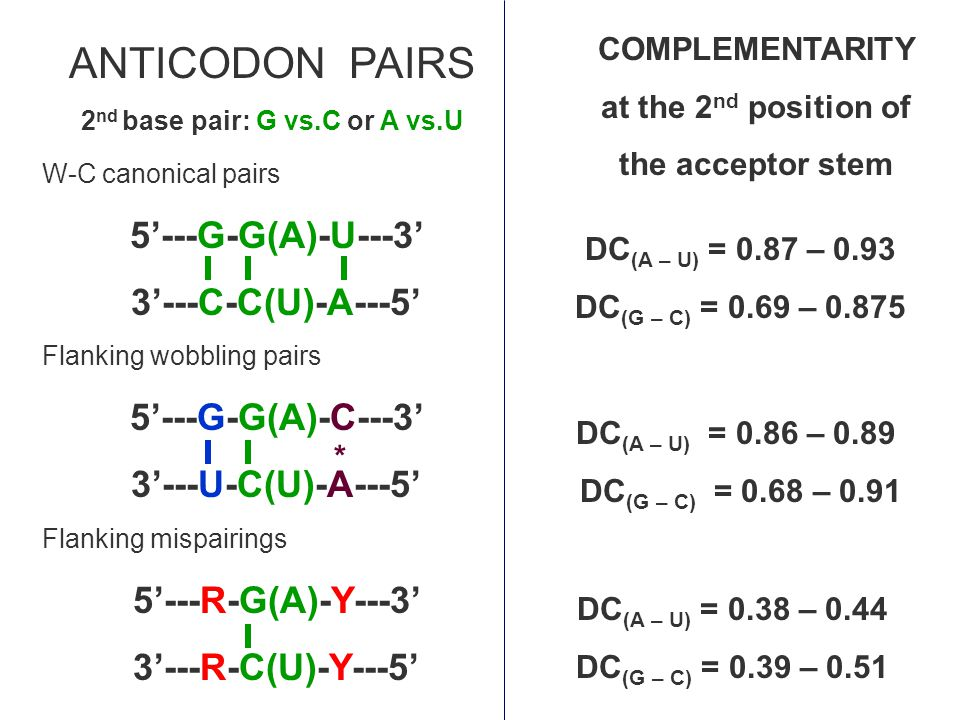 W-C canonical pairs 5'---G-G(A)-U---3' 3'---C-C(U)-A---5' Flanking wobbling pairs 5'---G-G(A)-C---3' 3'---U-C(U)-A---5' Flanking mispairings 5'---R-G(A)-Y---3' 3'---R-C(U)-Y---5' DC (A – U) = 0.87 – 0.93 DC (G – C) = 0.69 – 0.875 ANTICODON PAIRS 2 nd base pair: G vs.C or A vs.U COMPLEMENTARITY at the 2 nd position of the acceptor stem * DC (A – U) = 0.86 – 0.89 DC (G – C) = 0.68 – 0.91 DC (A – U) = 0.38 – 0.44 DC (G – C) = 0.39 – 0.51