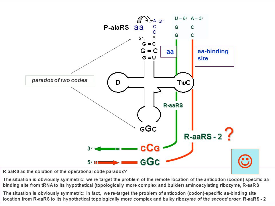 CCGCCGCCGCCG U – 5 ' G aa-binding site 3'3' R-aaRS R-aaRS as the solution of the operational code paradox? The situation is obviously symmetric: we re