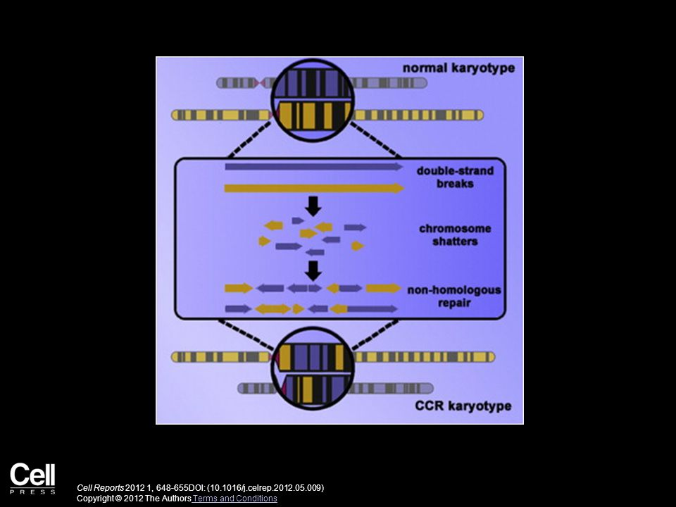 Cell Reports , DOI: ( /j.celrep ) Copyright © 2012 The Authors Terms and Conditions Terms and Conditions