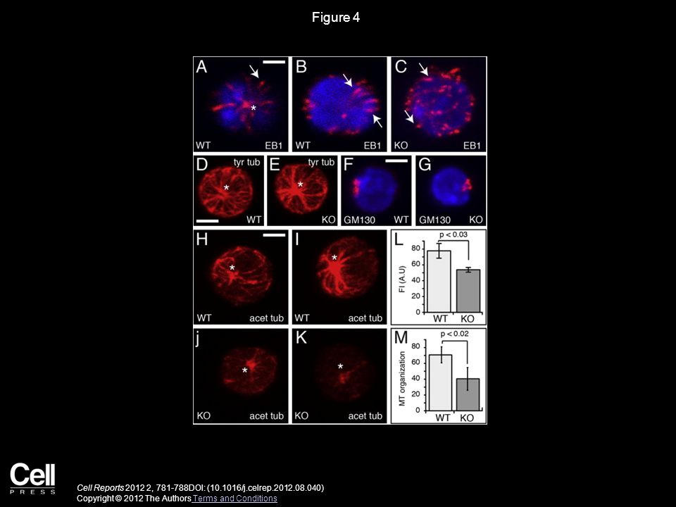 Figure 4 Cell Reports , DOI: ( /j.celrep ) Copyright © 2012 The Authors Terms and Conditions Terms and Conditions