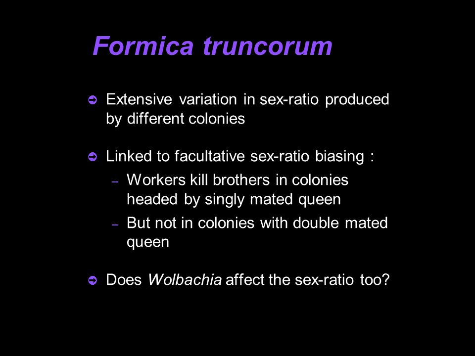 Formica truncorum  Extensive variation in sex-ratio produced by different colonies  Linked to facultative sex-ratio biasing : – Workers kill brother