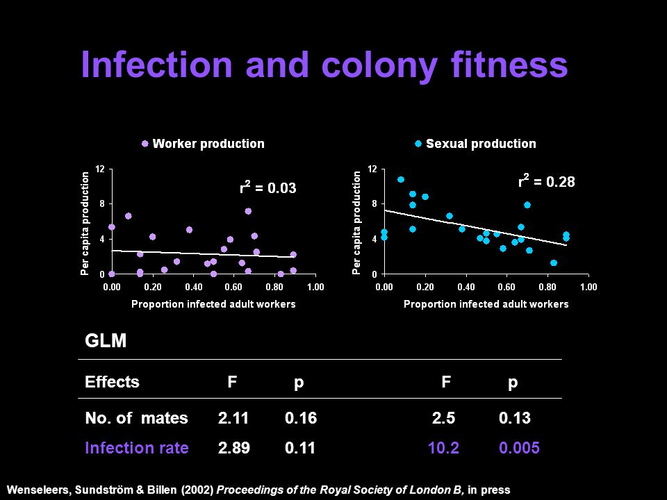 GLM Effects F p F p No. of mates2.110.16 2.5 0.13 Infection rate2.890.11 10.2 0.005 Infection and colony fitness Wenseleers, Sundström & Billen (2002)