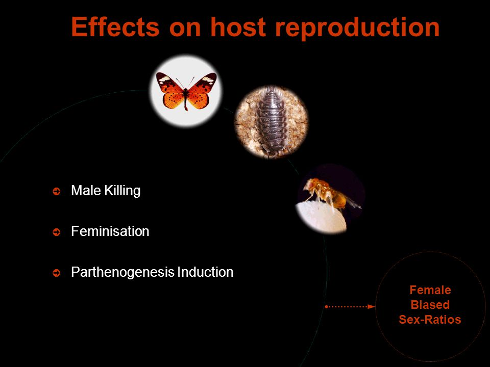 Female Biased Sex-Ratios  Male Killing  Feminisation  Parthenogenesis Induction Effects on host reproduction