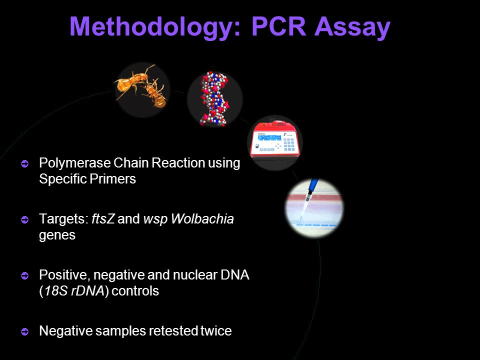  Polymerase Chain Reaction using Specific Primers  Targets: ftsZ and wsp Wolbachia genes  Positive, negative and nuclear DNA (18S rDNA) controls 