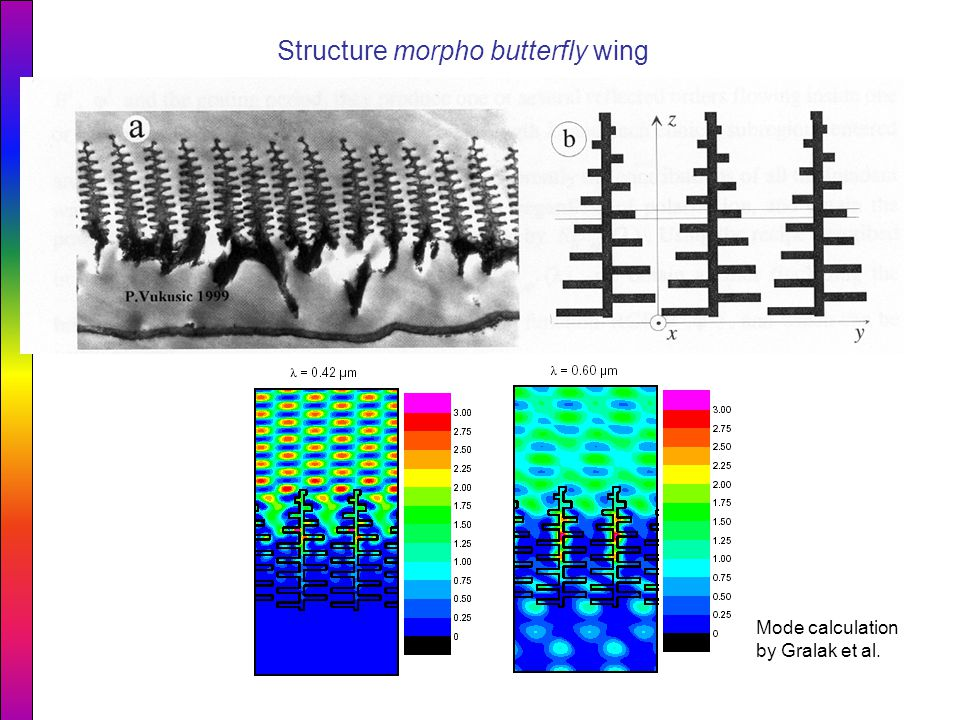 Structure morpho butterfly wing Mode calculation by Gralak et al.