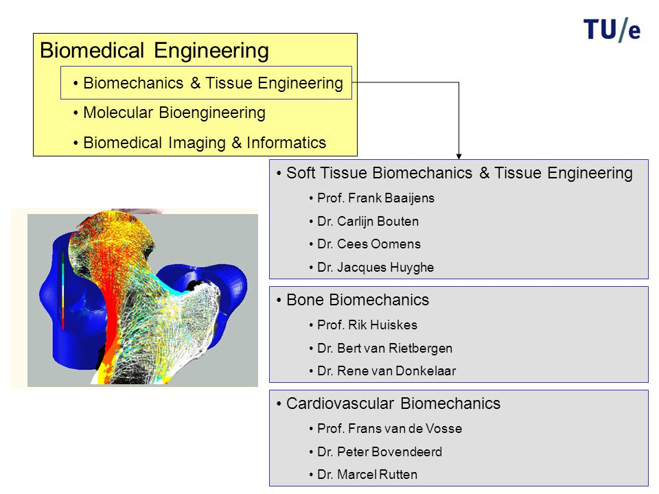 Biomedical Engineering Biomechanics & Tissue Engineering Molecular Bioengineering Biomedical Imaging & Informatics Cardiovascular Biomechanics Prof.