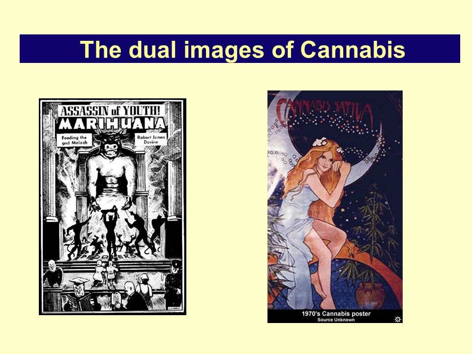 The dual images of Cannabis