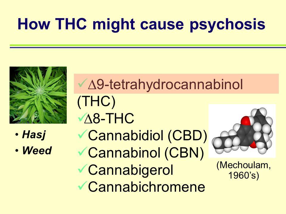 Hasj Weed  9-tetrahydrocannabinol (THC)  8-THC Cannabidiol (CBD) Cannabinol (CBN) Cannabigerol Cannabichromene How THC might cause psychosis (Mechou
