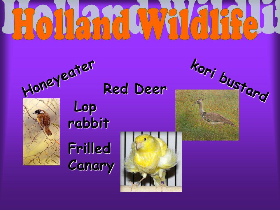 kori bustard Honeyeater RedDeer Red Deer Lop rabbit Frilled Canary