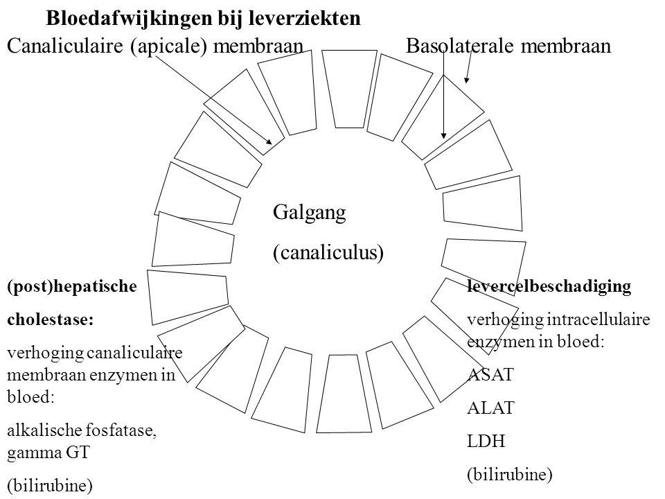 Galgang (canaliculus) Canaliculaire (apicale) membraanBasolaterale membraan (post)hepatische cholestase: verhoging canaliculaire membraan enzymen in bloed: alkalische fosfatase, gamma GT (bilirubine) levercelbeschadiging verhoging intracellulaire enzymen in bloed: ASAT ALAT LDH (bilirubine) Bloedafwijkingen bij leverziekten