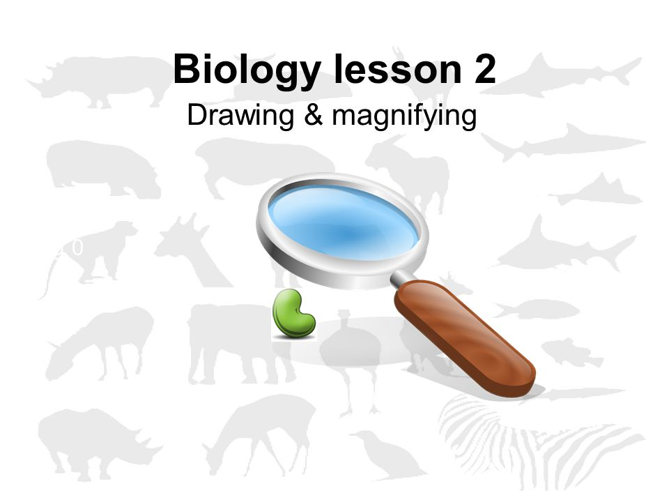 Biology lesson 2 Drawing & magnifying Vraag 0