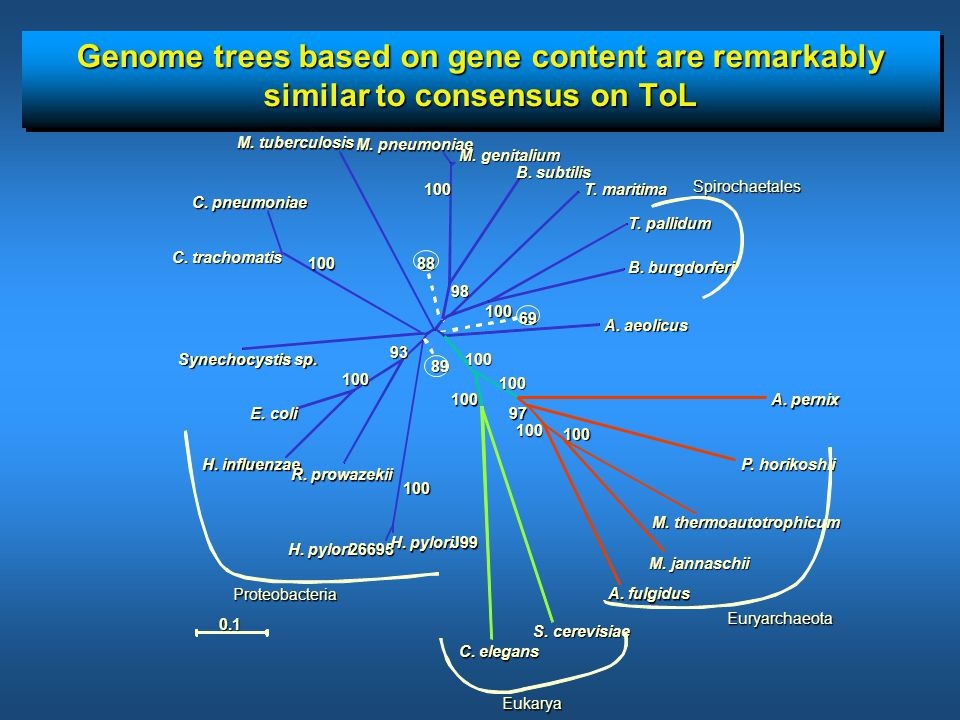Genome trees based on gene content are remarkably similar to consensus on ToL C.
