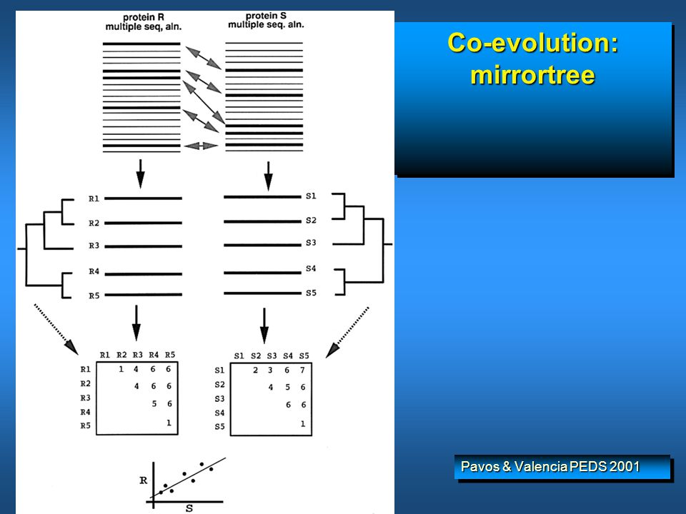Co-evolution: mirrortree Pavos & Valencia PEDS 2001