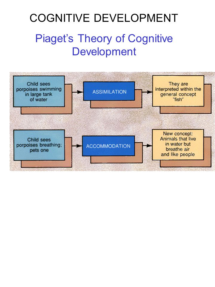 COGNITIVE DEVELOPMENT Piaget's Theory of Cognitive Development Piaget's Stages of Cognitive Development Stage 1: Sensorimotor Stage (Birth-2yrs) Stage 2: Preoperational Stage (2-7yrs) Stage 3: Concrete Operations (7-11yrs) Stage 4: Formal Operations (11-on) Invariant developmental sequence!