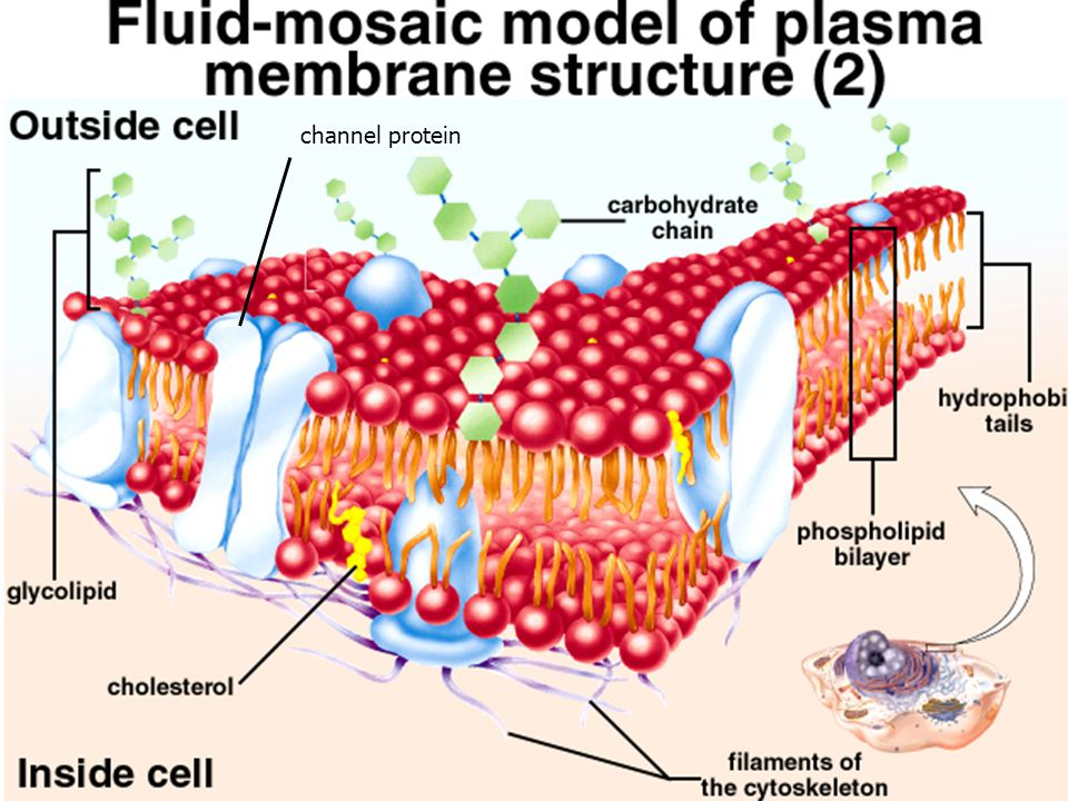 channel protein