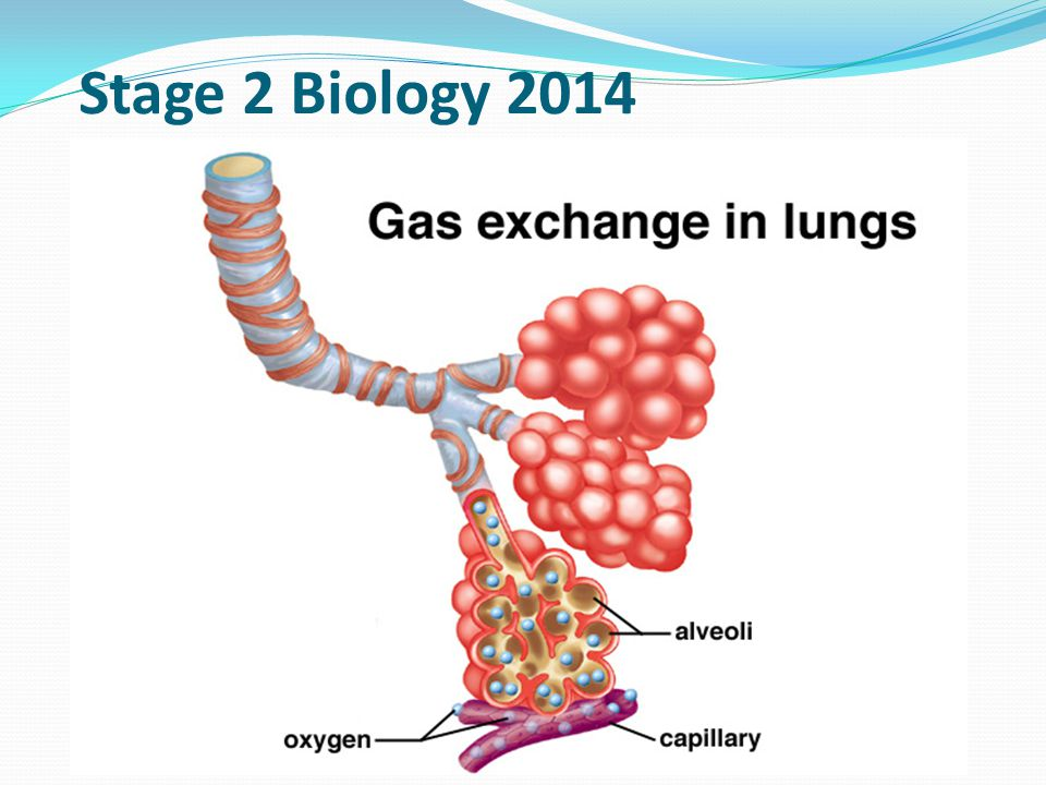 Stage 2 Biology 2014