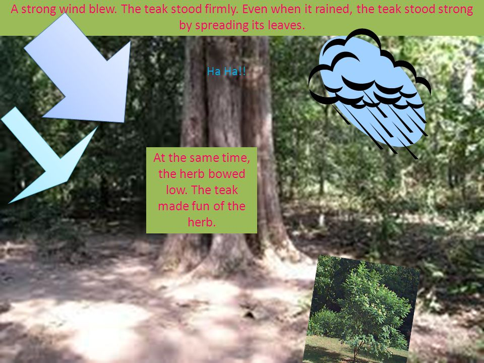 A strong wind blew. The teak stood firmly. Even when it rained, the teak stood strong by spreading its leaves. At the same time, the herb bowed low. T