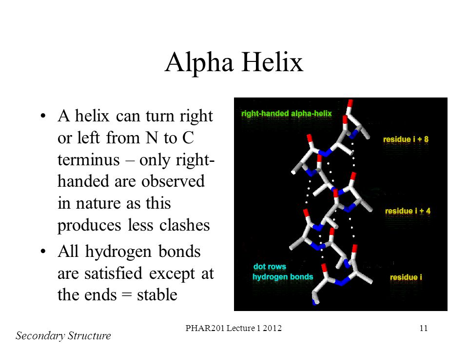 PHAR201 Lecture 1 201211 Alpha Helix A helix can turn right or left from N to C terminus – only right- handed are observed in nature as this produces less clashes All hydrogen bonds are satisfied except at the ends = stable Secondary Structure