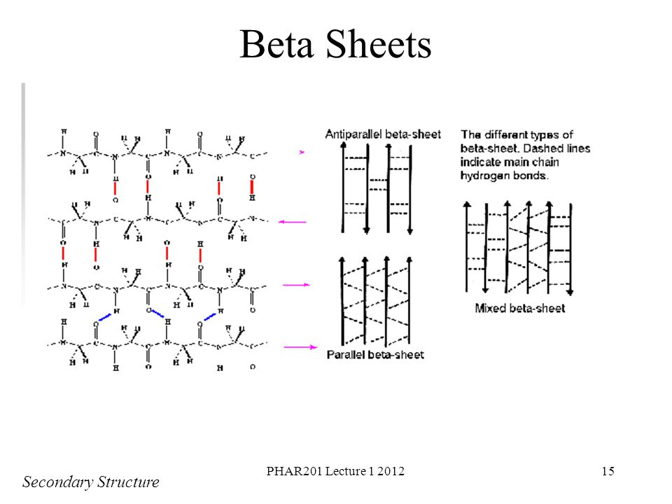 PHAR201 Lecture 1 201215 Beta Sheets Secondary Structure