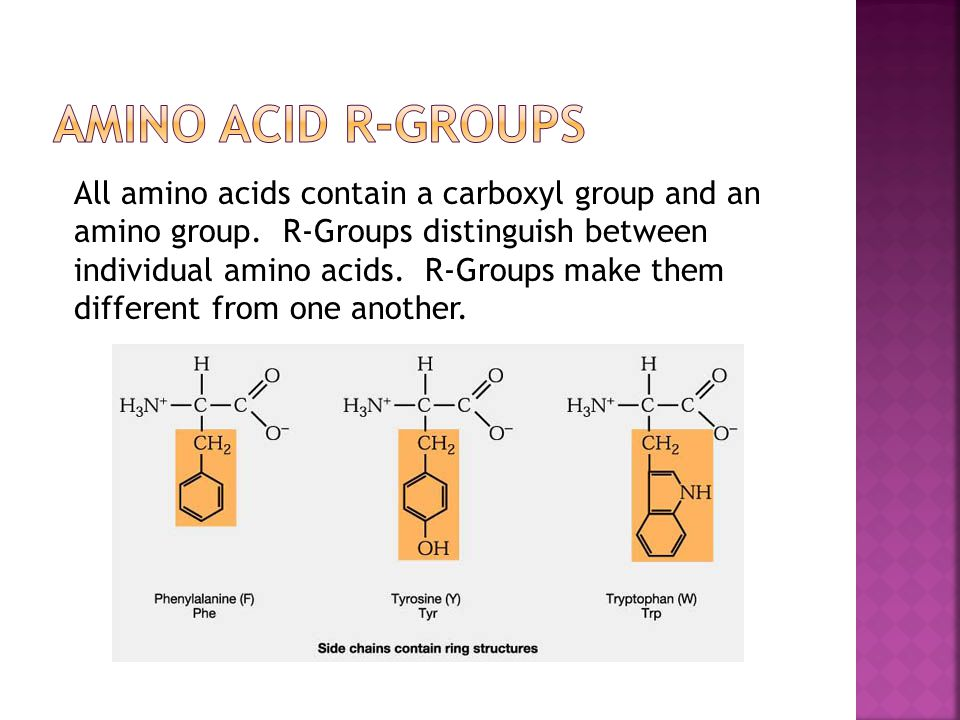 All amino acids contain a carboxyl group and an amino group.