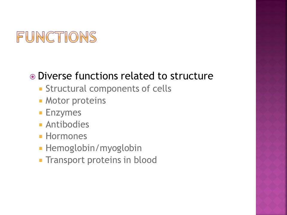 Diverse functions related to structure  Structural components of cells  Motor proteins  Enzymes  Antibodies  Hormones  Hemoglobin/myoglobin  Transport proteins in blood