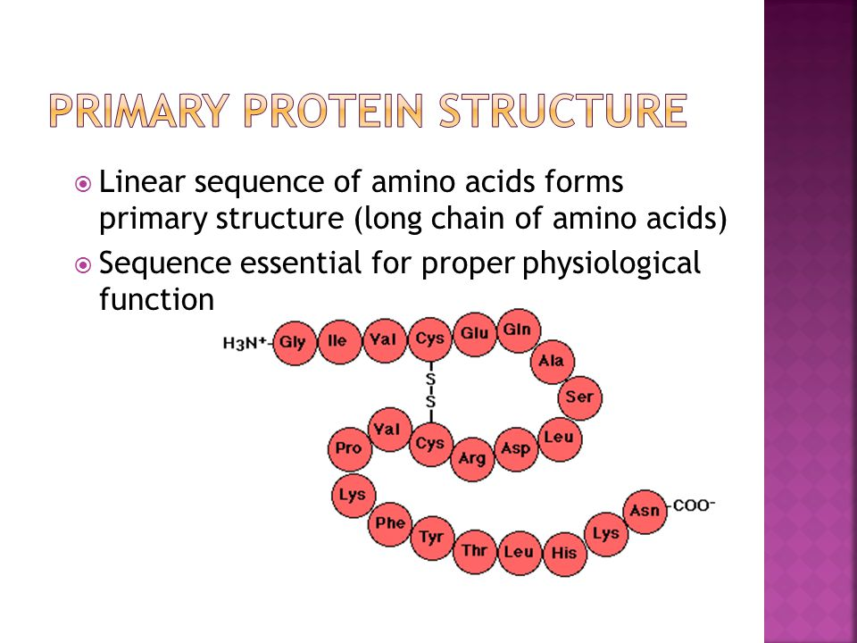  Linear sequence of amino acids forms primary structure (long chain of amino acids)  Sequence essential for proper physiological function
