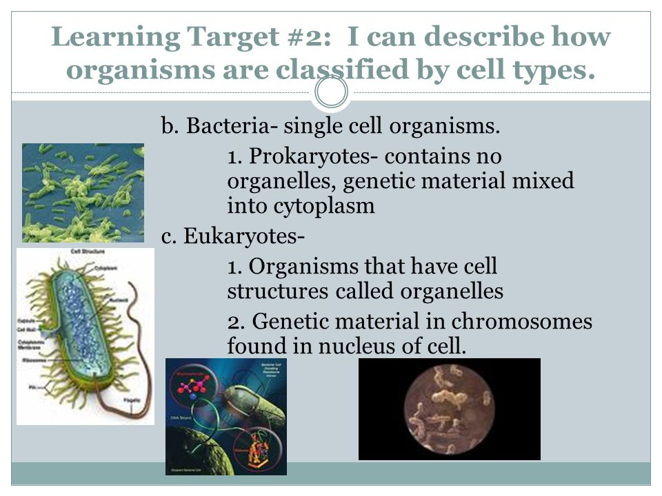 Learning Target #2: I can describe how organisms are classified by cell types. b. Bacteria- single cell organisms. 1. Prokaryotes- contains no organel
