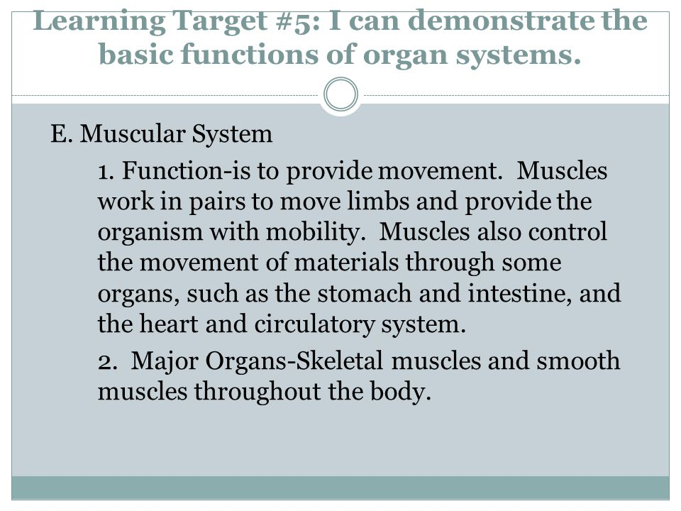 Learning Target #5: I can demonstrate the basic functions of organ systems. E. Muscular System 1. Function-is to provide movement. Muscles work in pai