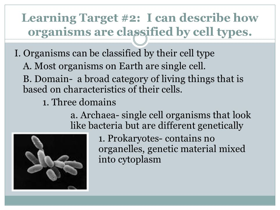 Learning Target #2: I can describe how organisms are classified by cell types. I. Organisms can be classified by their cell type A. Most organisms on