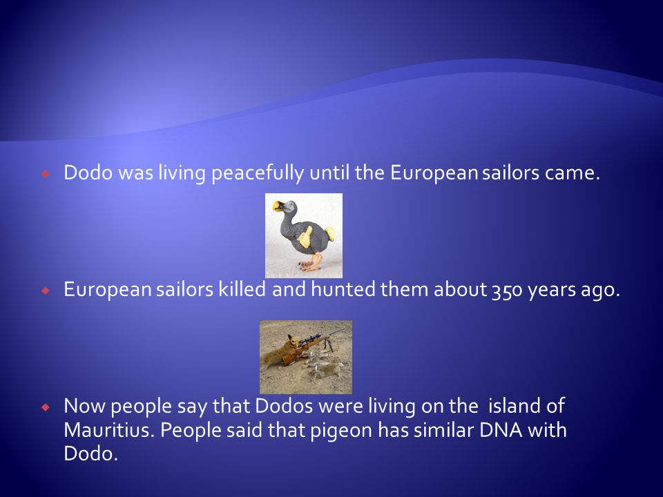  Dodo was living peacefully until the European sailors came.  European sailors killed and hunted them about 350 years ago.  Now people say that Dod