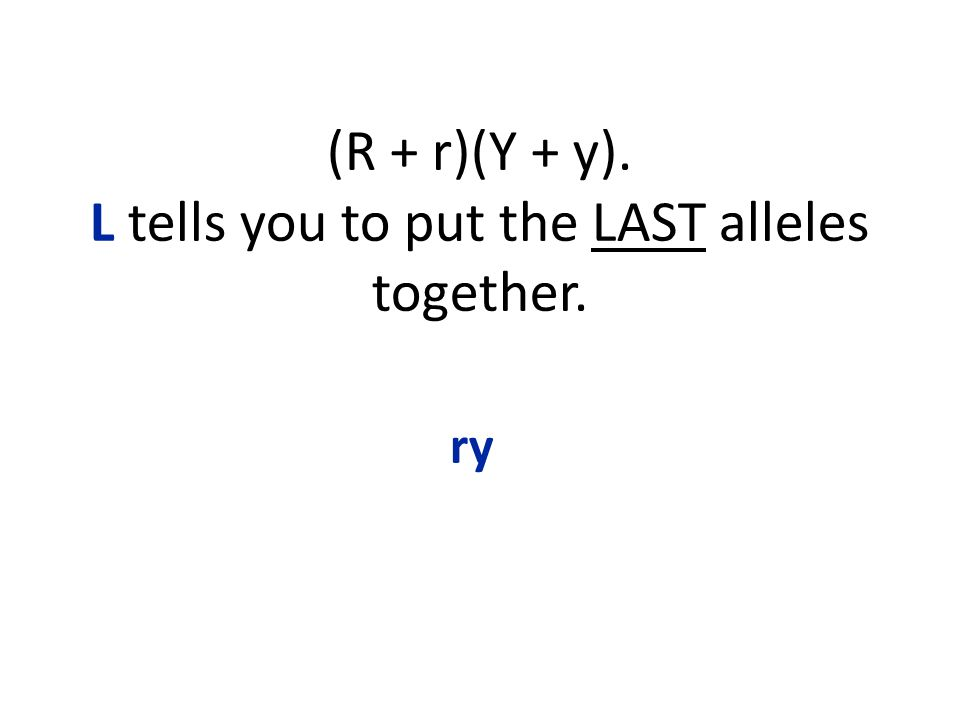 (R + r)(Y + y). L tells you to put the LAST alleles together. ry