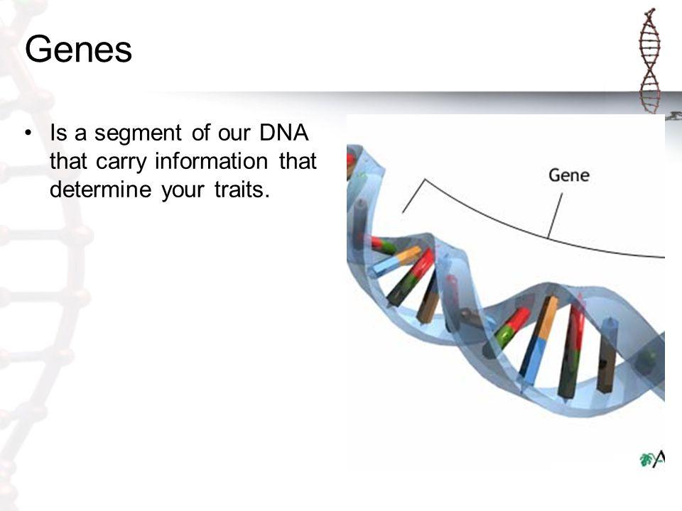 Genetics The science of heredity.