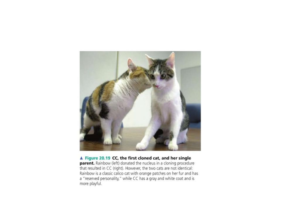What are the advantages (+) and disadvantages (-) of animal cloning .