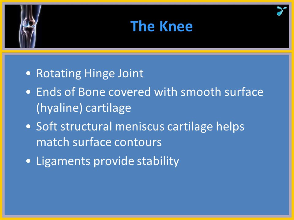 The Knee Any of the knee structures can be damaged and cause pain Today 's talk will be about the surface cartilage