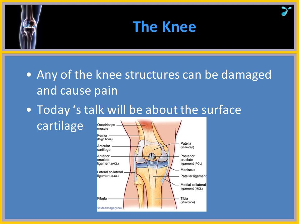 Changes in Articular Cartilage Joint injury and deformity Periarticular tissue and fluid damage Inflammation Chronic wear and age Courtesy of Robert J.