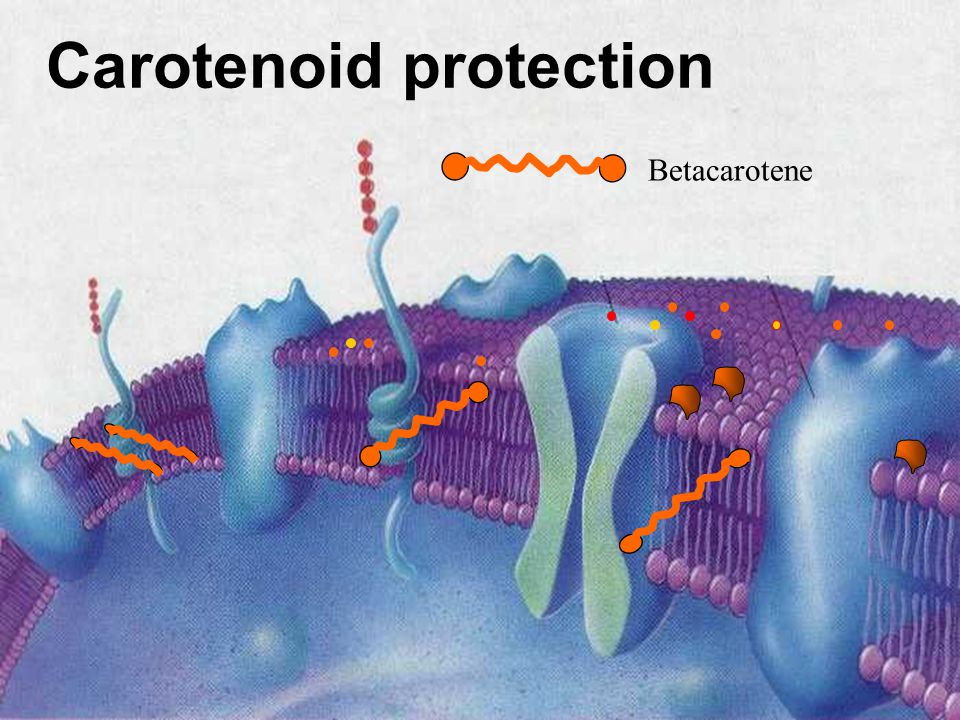 Betacarotene Carotenoid protection