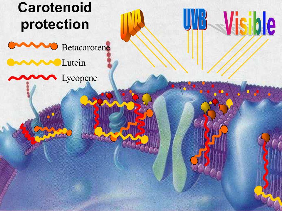 Lutein Lycopene Betacarotene Carotenoid protection