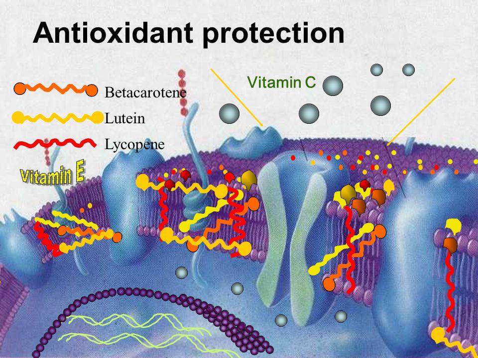 Antioxidant protection Vitamin C Lutein Lycopene Betacarotene