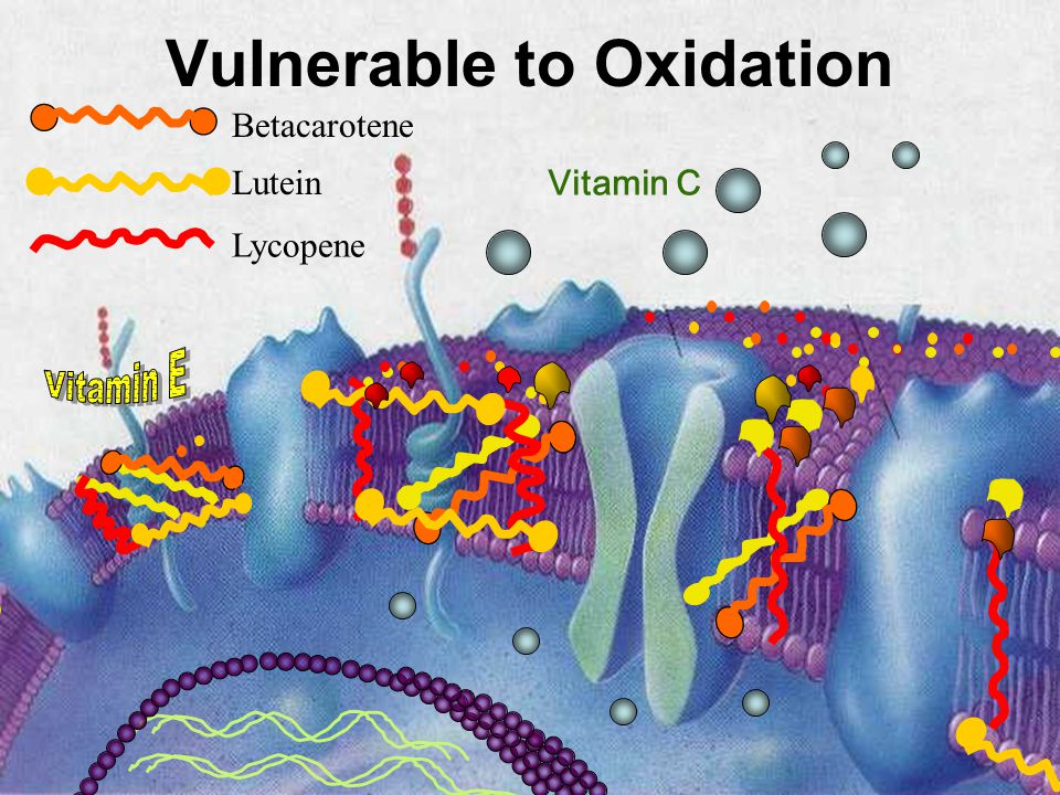 Vulnerable to Oxidation Vitamin C Lutein Lycopene Betacarotene