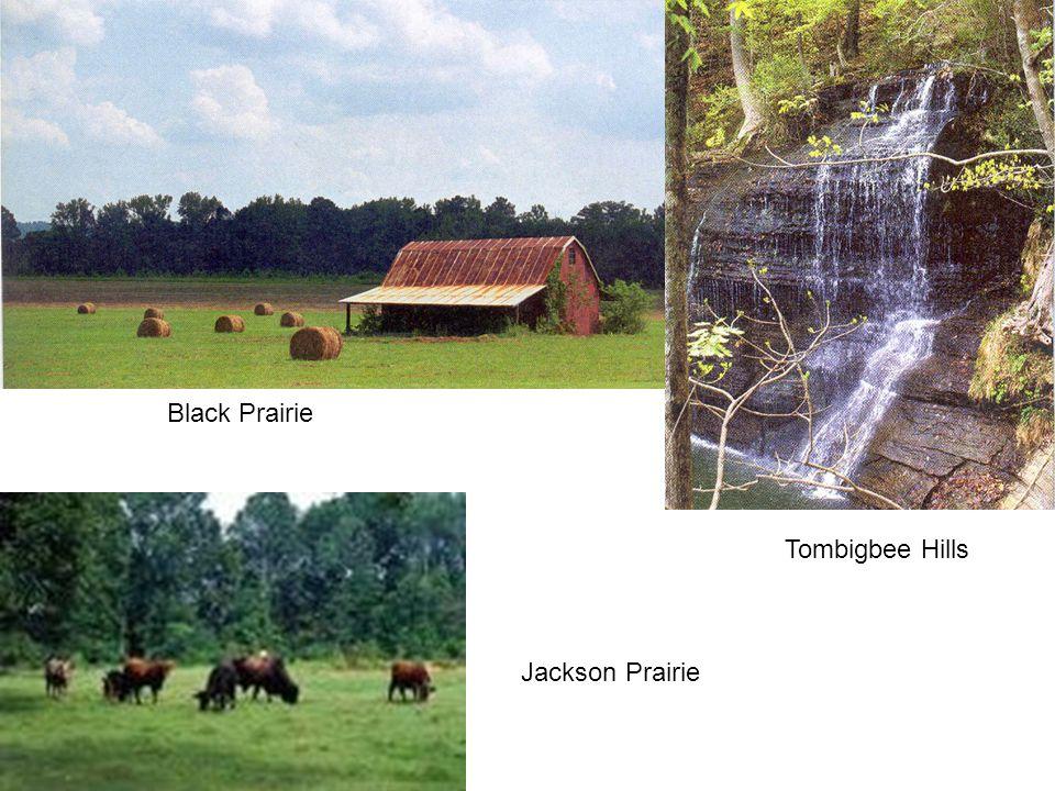 Black Prairie Tombigbee Hills Jackson Prairie