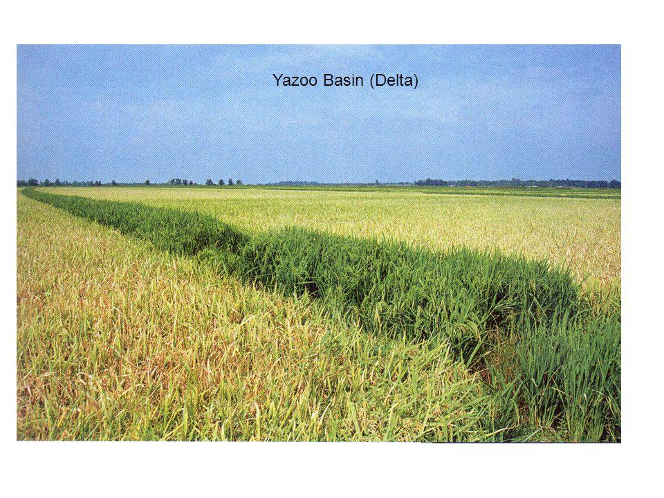 Yazoo Basin (Delta)