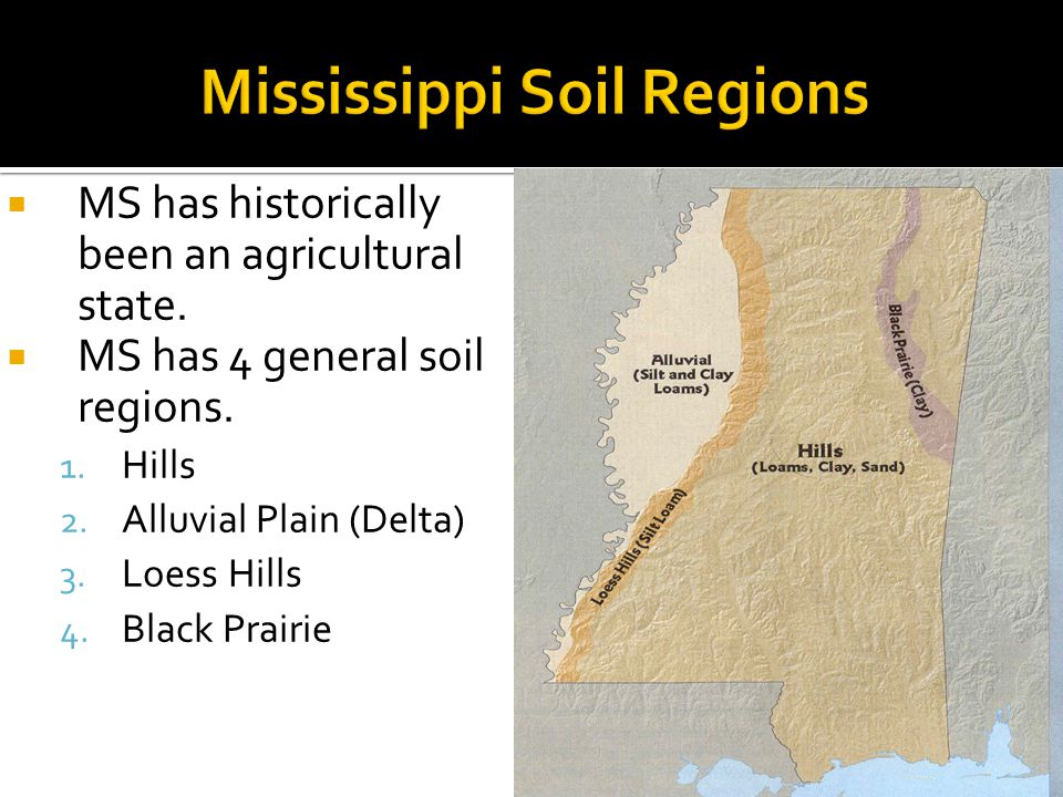  MS has historically been an agricultural state.  MS has 4 general soil regions. 1. Hills 2. Alluvial Plain (Delta) 3. Loess Hills 4. Black Prairie