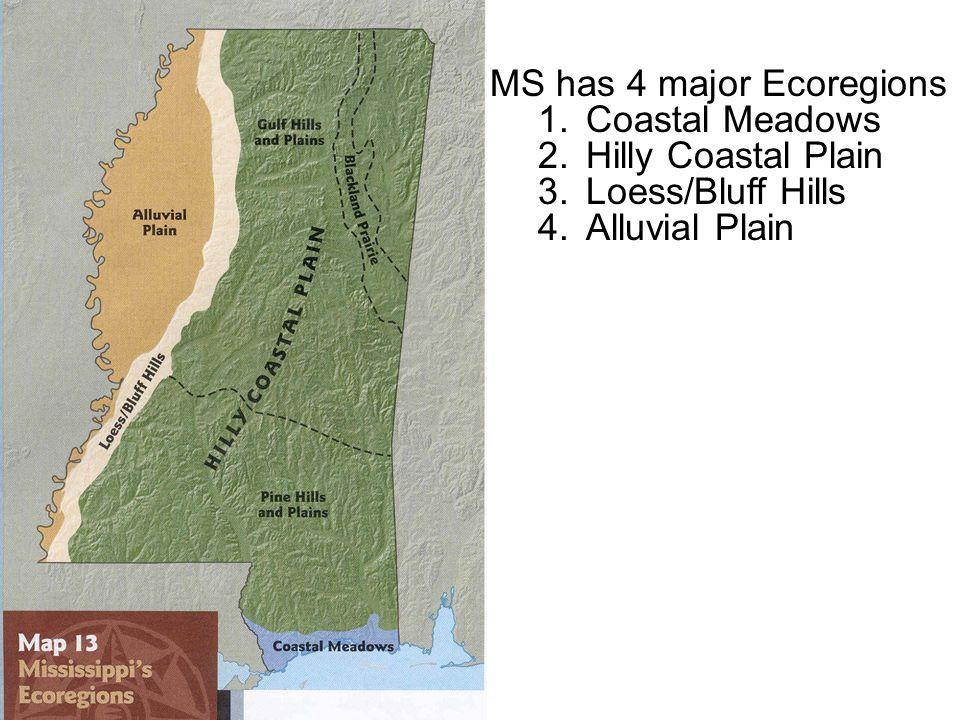 MS has 4 major Ecoregions 1.Coastal Meadows 2.Hilly Coastal Plain 3.Loess/Bluff Hills 4.Alluvial Plain