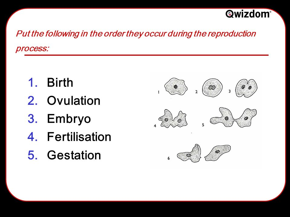 Put the following in the order they occur during the reproduction process: 1.Birth 2.Ovulation 3.Embryo 4.Fertilisation 5.Gestation