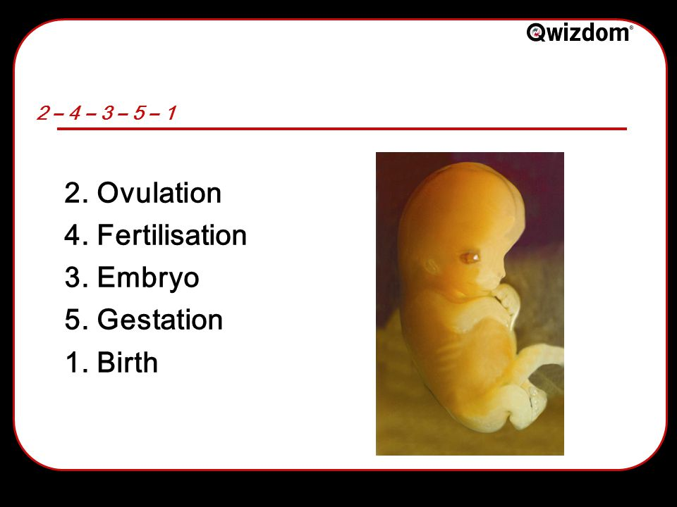 2 – 4 – 3 – 5 – 1 2. Ovulation 4. Fertilisation 3. Embryo 5. Gestation 1. Birth