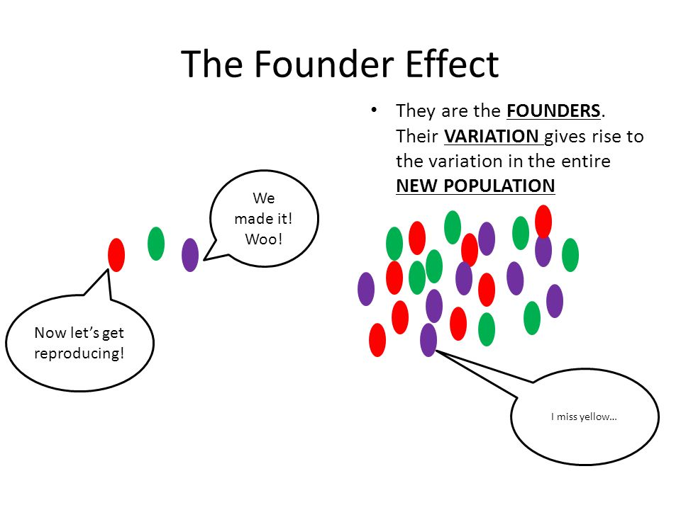 The Founder Effect They are the FOUNDERS. Their VARIATION gives rise to the variation in the entire NEW POPULATION We made it! Woo! Now let's get repr