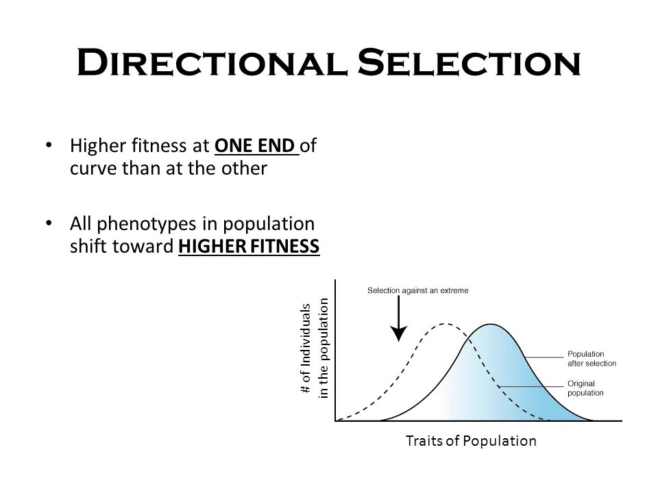 GENETIC EQUILIBRIUM DEFINITION: When allele frequencies in a population DON'T CHANGE  NO EVOLUTION HAPPENS Hardy-Weinberg Principle States that allele frequencies in a population will remain CONSTANT as long as 5 things are true…